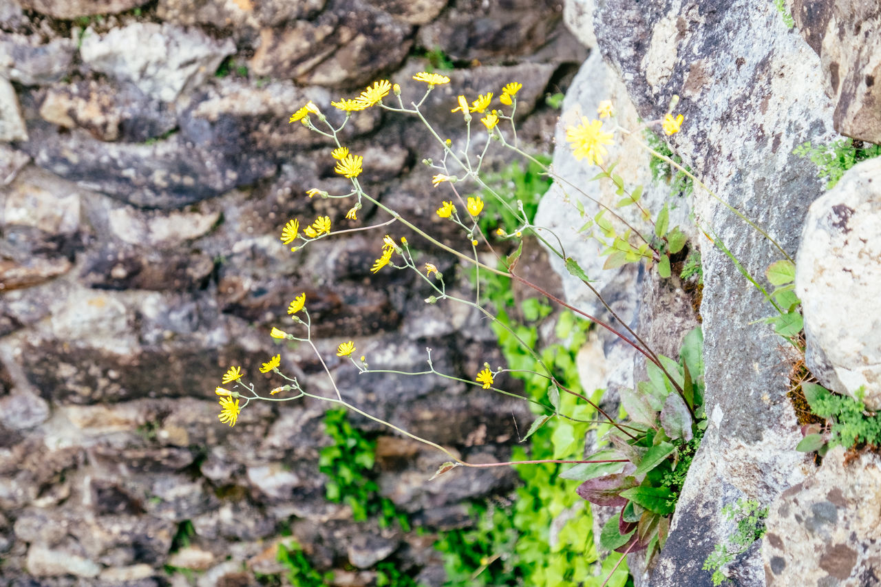Animal Themes Beauty In Nature Close-up Day Fragility Freshness Growth Leaf Nature No People Outdoors Plant Tree Trunk