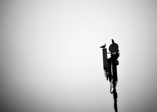 Seagull And Crow NikonD3100