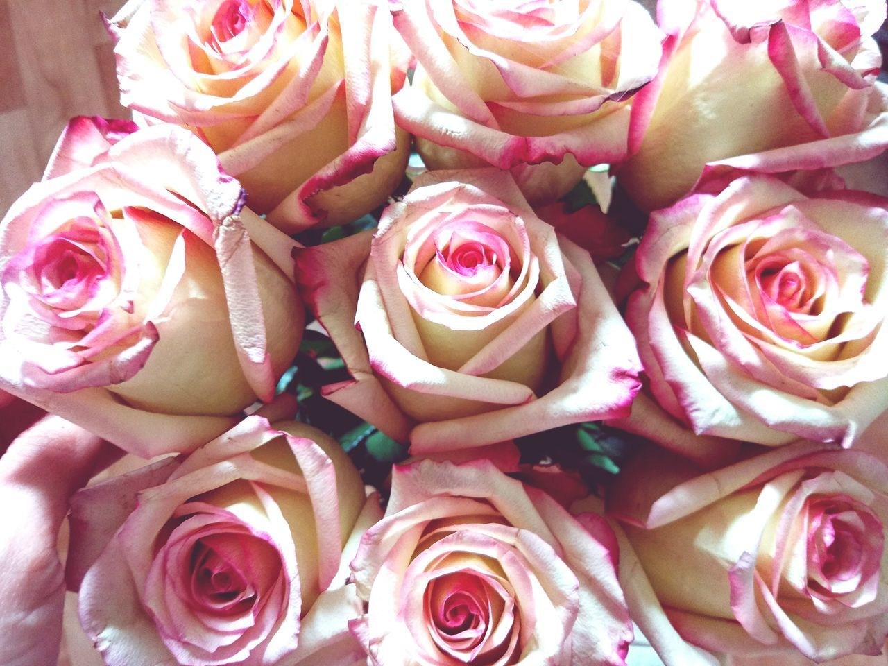 Directly Above Shot Of Bunch Of Pink Rose Flowers