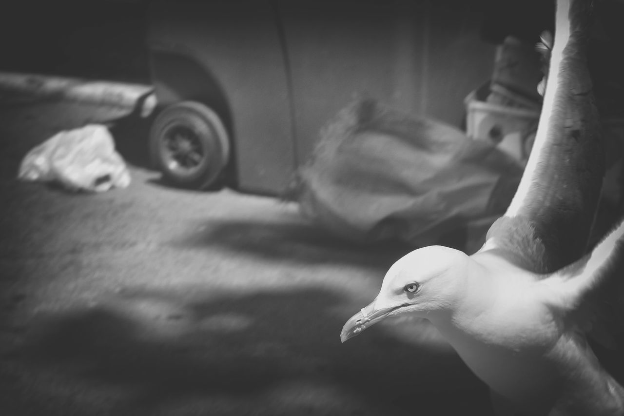 Action Animal Animal Photography Animal Themes ArtWork Bird Bw Photography Bw_collection Bw_lover BW_photography City Life Citylife Cleaner Streets Indoors  No People One Animal Seagull Seagullincity Seagulls In Flight Street Streetart Streetcleaner Streetphoto_bw Walking Around Walking Around The City