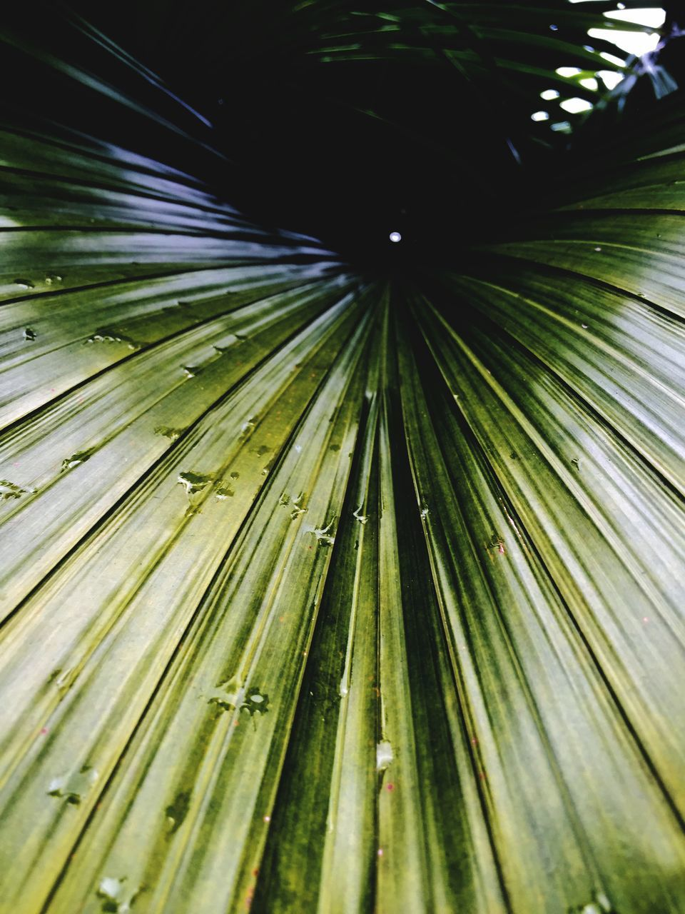 nature, green color, growth, leaf, beauty in nature, backgrounds, palm leaf, close-up, no people, full frame, day, outdoors, palm tree, frond, freshness, tree