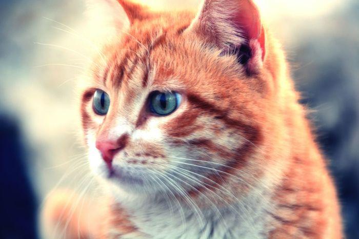 Thecat Animallove Catcatcat Bestfriend