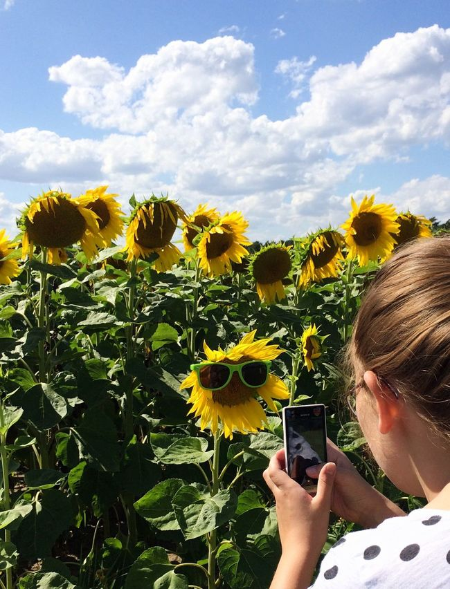 Faces Of Summer Sunflower EyeEm Nature Lover Nature On Your Doorstep Capturing Freedom Enjoying Life Open Edit