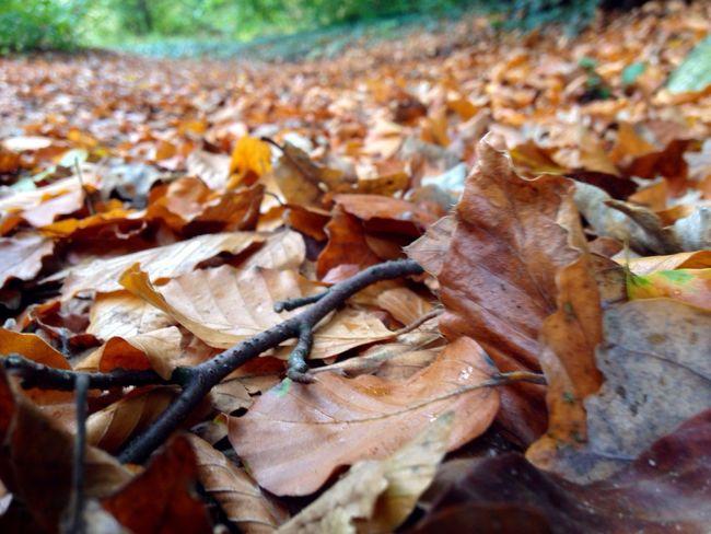 Autumn EyeEm Nature Lover EyeEm Best Shots Autumn Colors Deceptively Simple