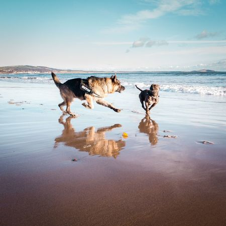 EyeEm Selects Staffordshire Bull Terrier Staffie Staffy Beach Water Animal Animal Themes No People Sea Day Outdoors Sky Mammal German Shepherd