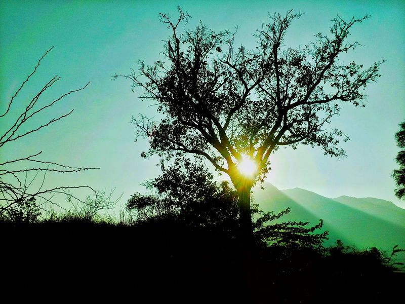 Sky Nature Sunset No People Tree Growth Outdoors Silhouette Beauty In Nature Sun Low Angle View Close-up Day Beforenight Blue Hour Bluesky Aftersunset Freshness Wandering Dayvsnight Nature Blue The Great Outdoors - 2017 EyeEm Awards