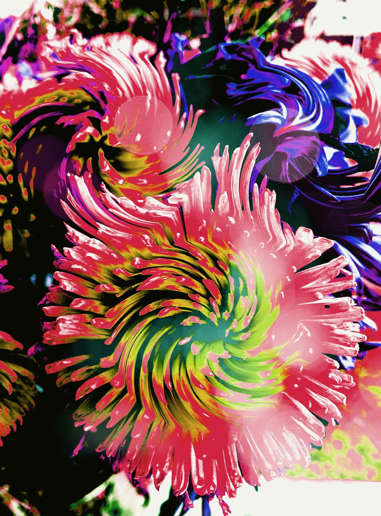 Swirlyflowers Flowers Edited Showcase July Coloroflife ColourOFlife Colour Of Life Pivotal Ideas
