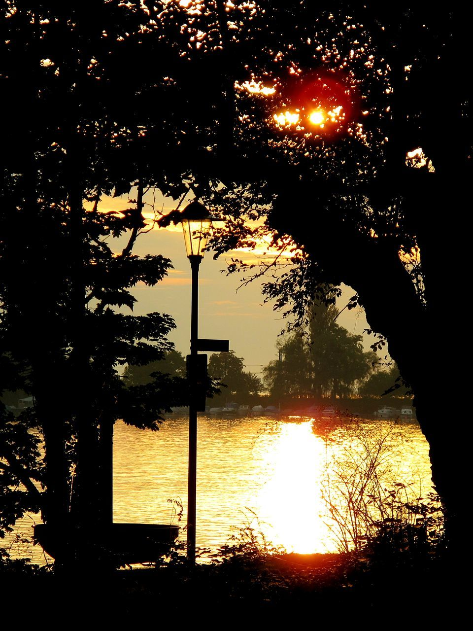 tree, silhouette, sunset, water, nature, no people, growth, tree trunk, outdoors, lake, tranquil scene, beauty in nature, scenics, sky, illuminated, day