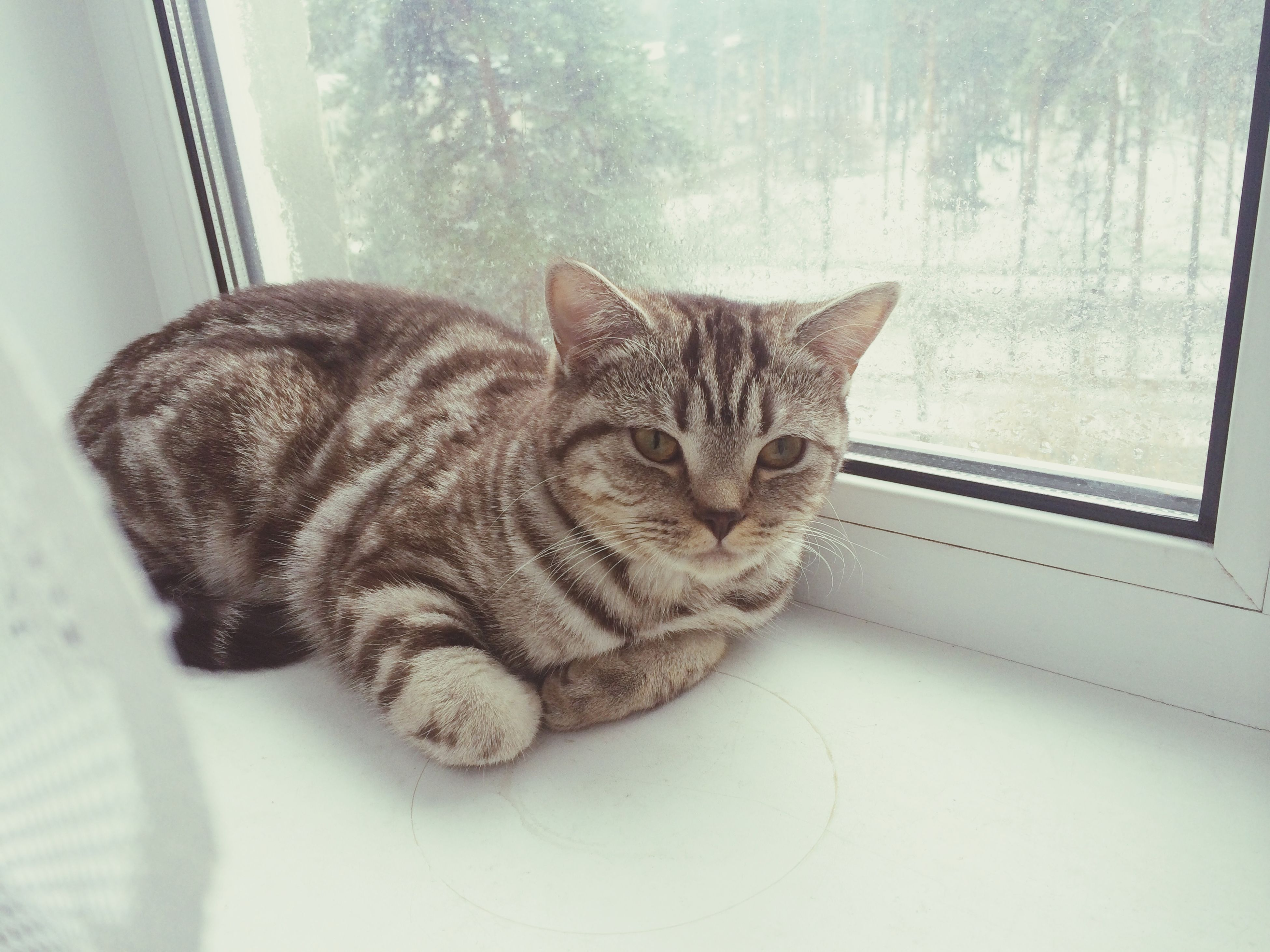 pets, indoors, domestic animals, domestic cat, cat, one animal, animal themes, mammal, feline, relaxation, whisker, resting, lying down, sleeping, home interior, bed, window, close-up, eyes closed, home