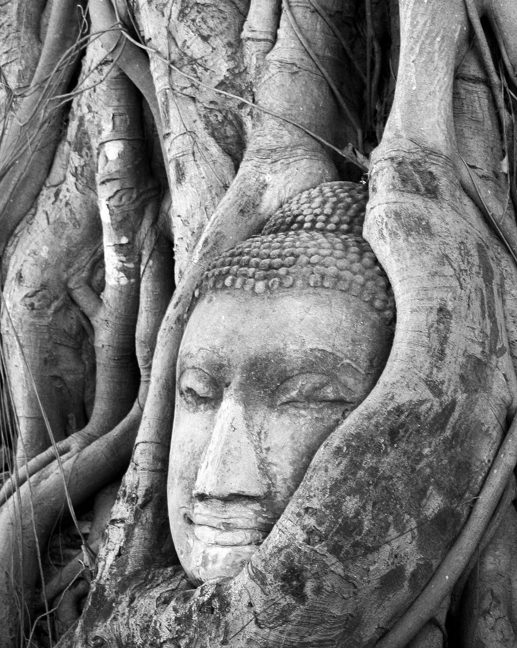 statue, sculpture, human representation, male likeness, art and craft, ancient, history, no people, old ruin, spirituality, ancient civilization, day, outdoors, tree, close-up, nature