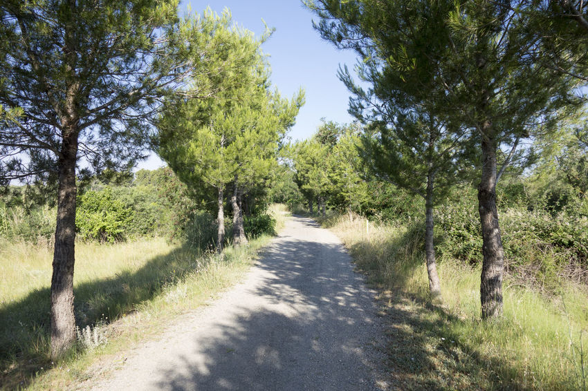 Bike Castellón Clear Sky Cycling Day Grass Green Color Greenway Growth Landscape Nature Nature No People Ojos Negros Outdoors Road Scenics Sky SPAIN The Way Forward Tranquil Scene Tree València Via Verde Way