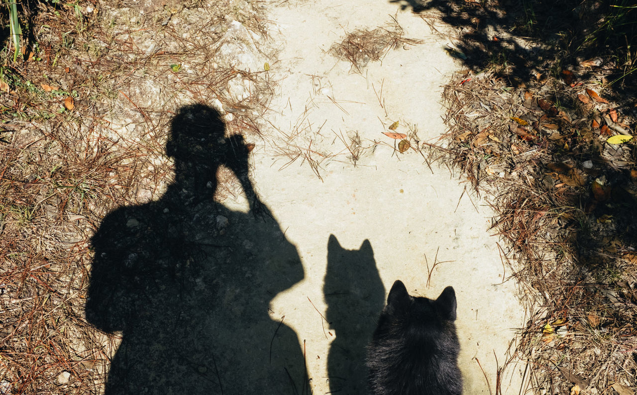 Dog Hiking Holiday Leisure Activity Lifestyles Outdoors Pet Real People Shadow Sunlight