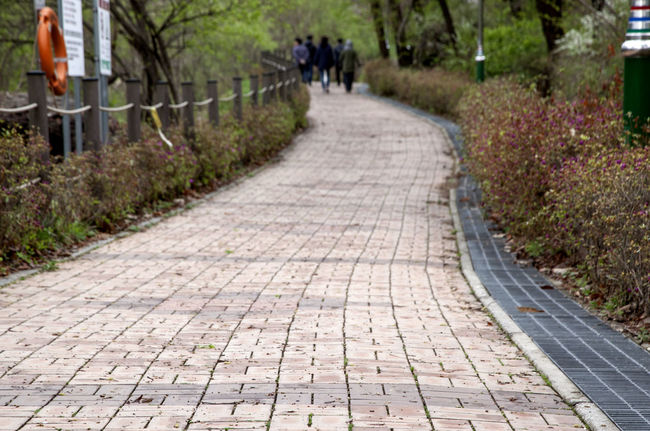 Beauty In Nature Brick Road Day Diminishing Perspective Empty Footpath Grass Green Color Growth Long Narrow Nature No People Outdoors Park Pathway Plant Surface Level The Way Forward Tranquil Scene Tranquility Tree Vanishing Point Walkway Walkwaywhy