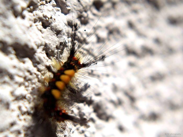 Animals Bugs Butterfly Closeup Macro Nature Single Object Small Animal