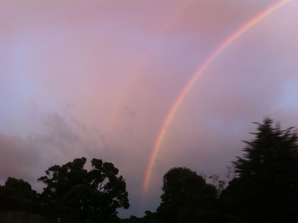 Beauty In Nature Cloud - Sky Day Double Rainbow Double Rainbows Double Rainbows 🌞 Low Angle View Nature No People Outdoors Rainbow Scenics Sky Tranquility Tree Weather