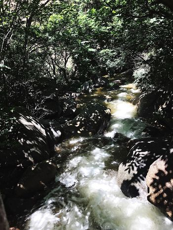 River Flowing Water Nature Waterfall Water Motion Forest Beauty In Nature Tree Outdoors Rock - Object Tranquil Scene Tranquility No People Day Scenics
