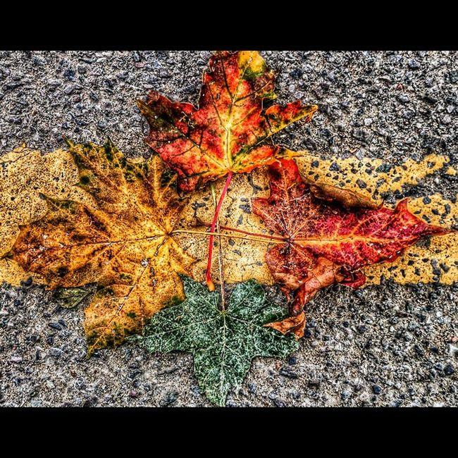 Leaves on the ground!! Leaves Fall Autumn Fourleaves natureamazingcoloursdetaildecaylovecutecreativity