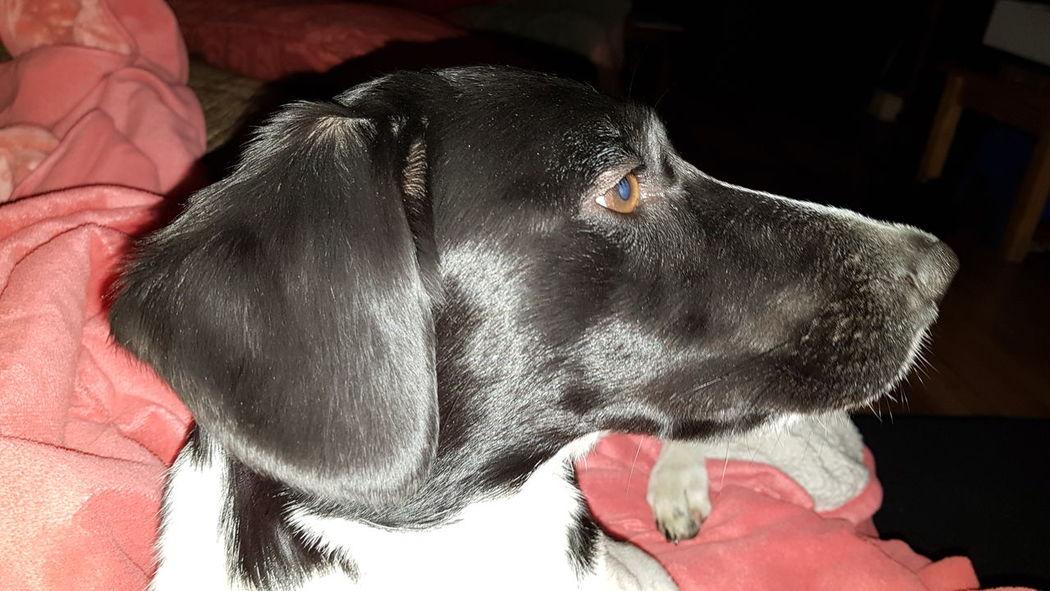 EyeEm Selects Pets Dog Domestic Animals One Animal Mammal Animal Animal Themes Indoors  No People Close-up Day