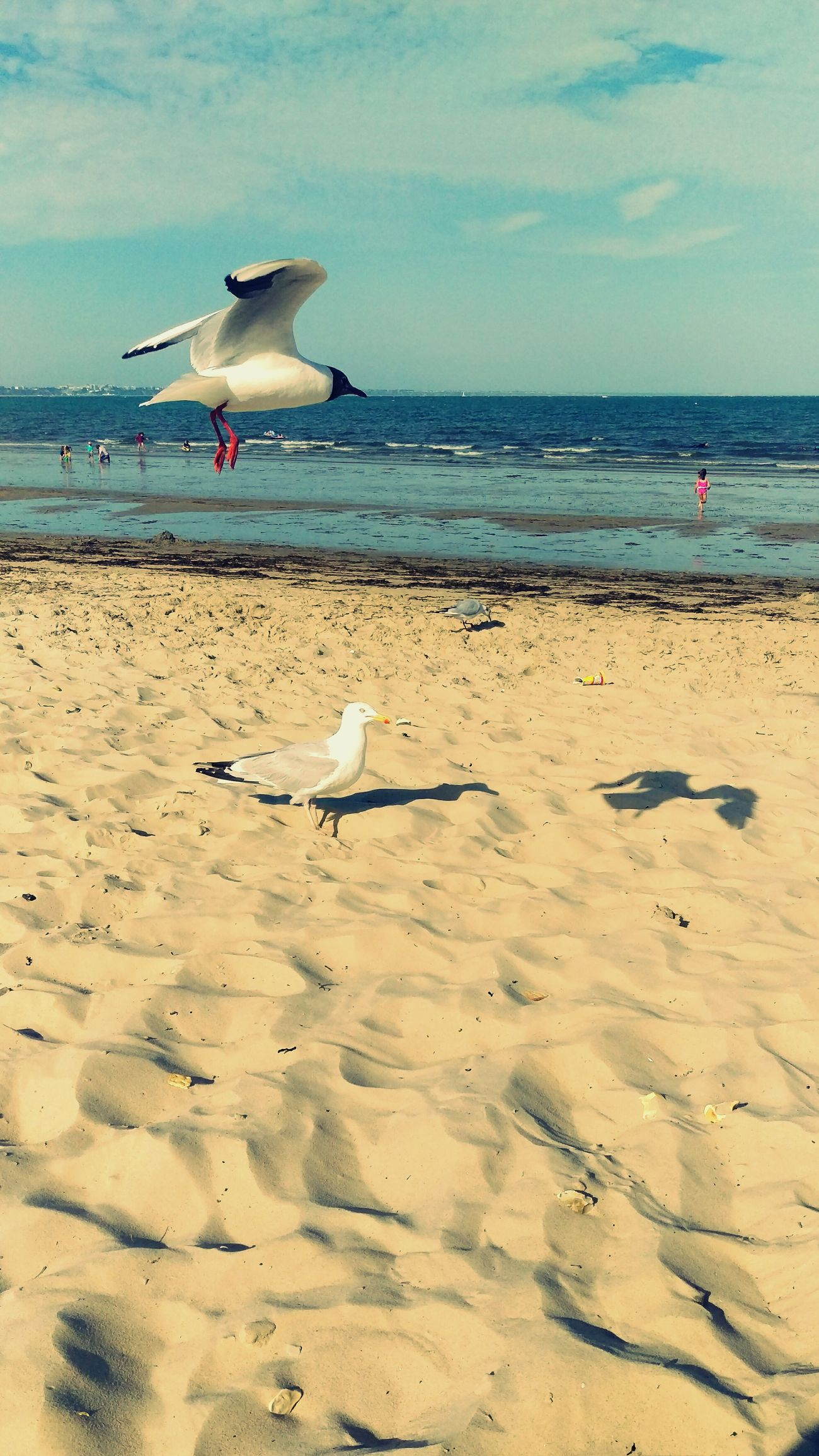 Relaxing Getting A Tan Sea Enjoying The Sun Aroundtheworld Taking Photos Beach Seagulls Birds