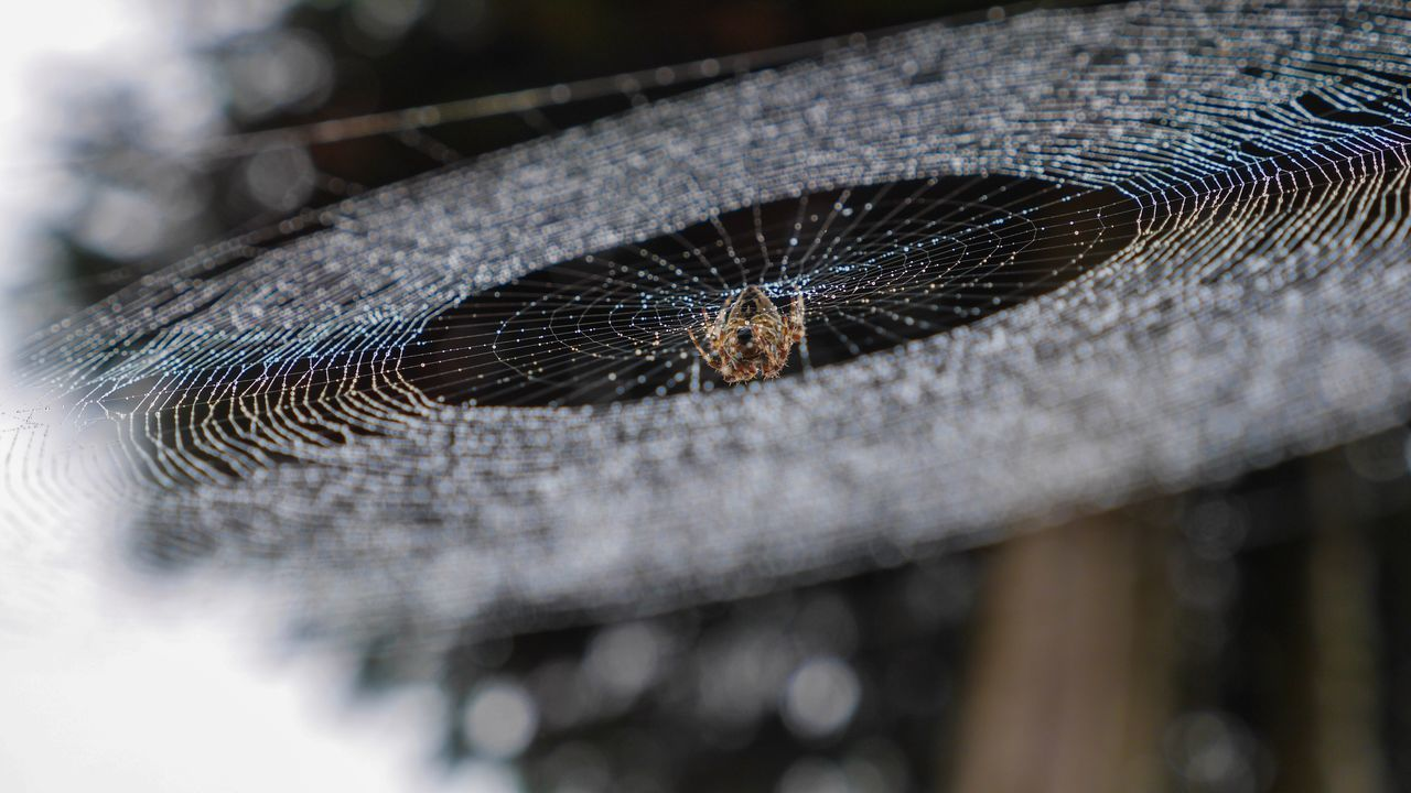 One Animal Animal Themes Animals In The Wild Wildlife Selective Focus Close-up Zoology Animal Eye Extreme Close-up Animal Head  Arthropod Invertebrate Focus On Foreground No People Crawling Animal Spider Spiderweb Spider Web Dew Dew Drops Dew Drops On Spider Web Arachnid The Magic Mission