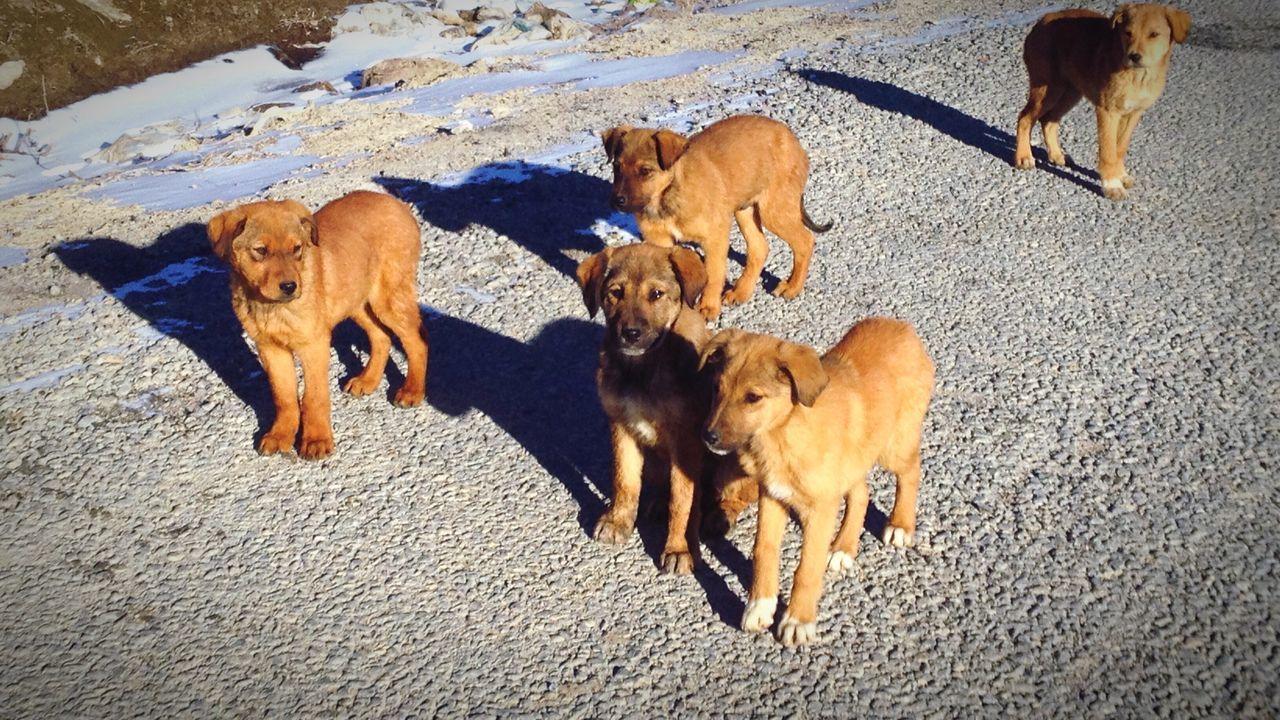 Beautiful stock photos of welpen, Animal Head, Animal Themes, Brown, Dog