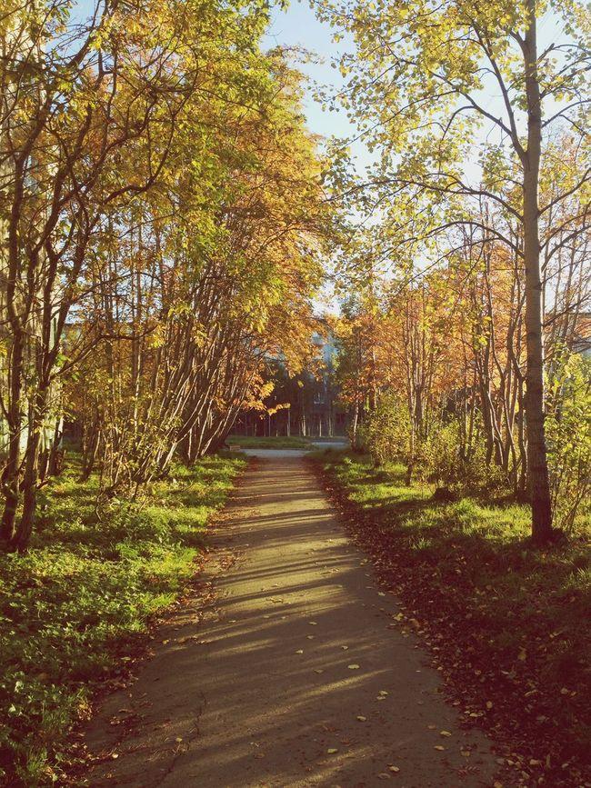 Autumn 💕🍁
