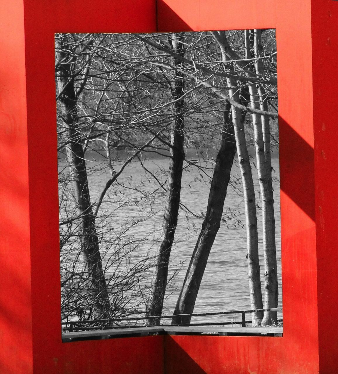 red, no people, close-up, tree, bare tree, day, outdoors