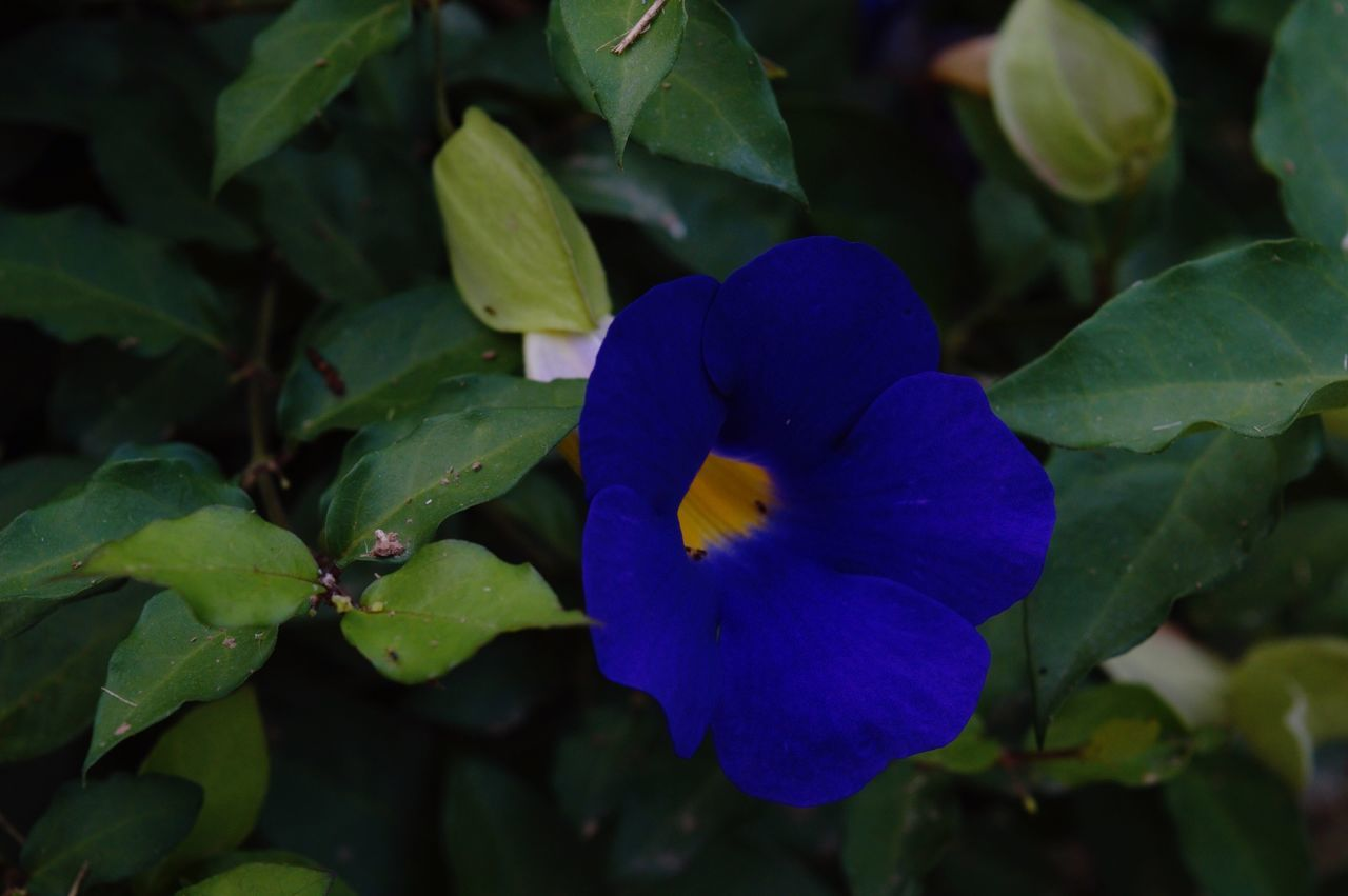 Flower Head Flower Freshness Beauty In Nature Nature Growth Blue Leaf Plant Green Color Purple No People Outdoors Day Plant Beauty In Nature Growth Nature