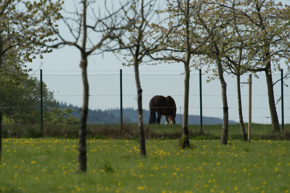 Horse Animal Themes Animals Fence Grazing Horse Growth Horse No People One Animal Outdoors Spring Springtime Tree Working Animal