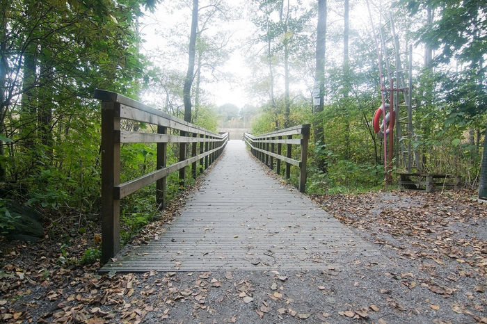 Forest foliage and marsh wet grounds views and details, Stockholm, Sweden in October. Beauty In Nature Bridge Bridge - Man Made Structure Day Footbridge Forest Growth Lifering Nature No People Outdoors Railing Scenics The Way Forward Tranquil Scene Tranquility Tree
