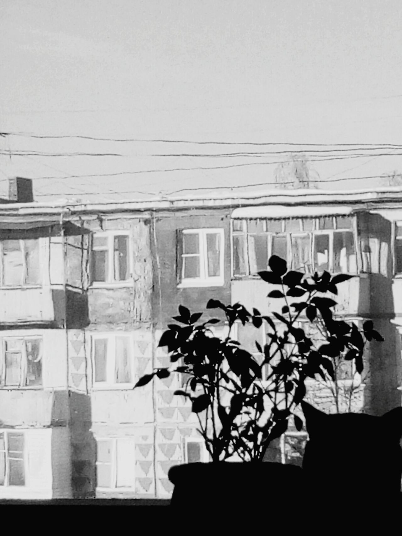 Architecture Building Exterior Built Structure Window No People City Residential Building Outdoors Day Nature Sky Eye4photography  Indoors  Ivy Cat Cats Of EyeEm Silhouette Black And White Collection  Blackwhite Black And White Photography Scrapbook Indoors  EyeEm City
