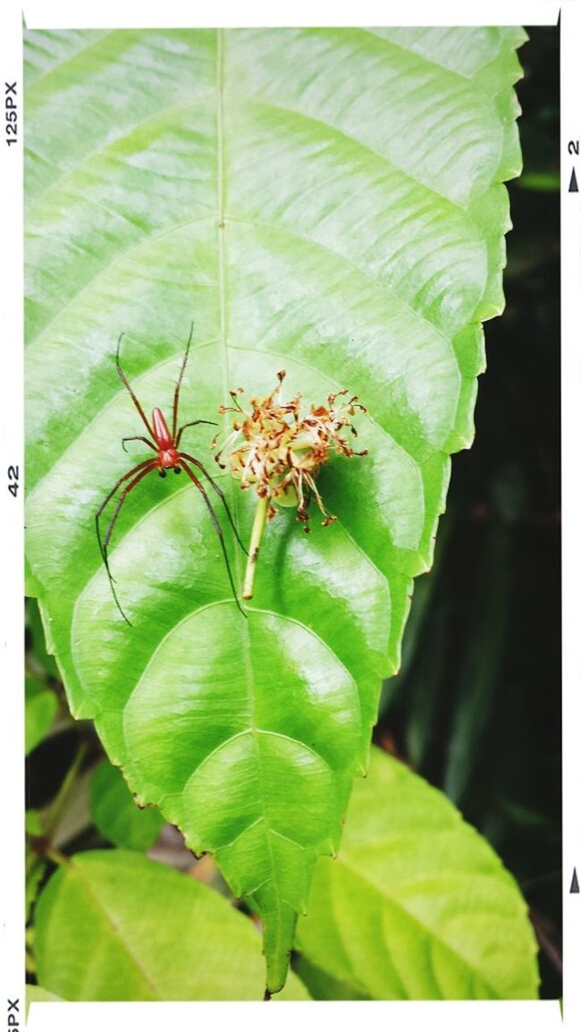 Guess what kind of arachnid types am I?