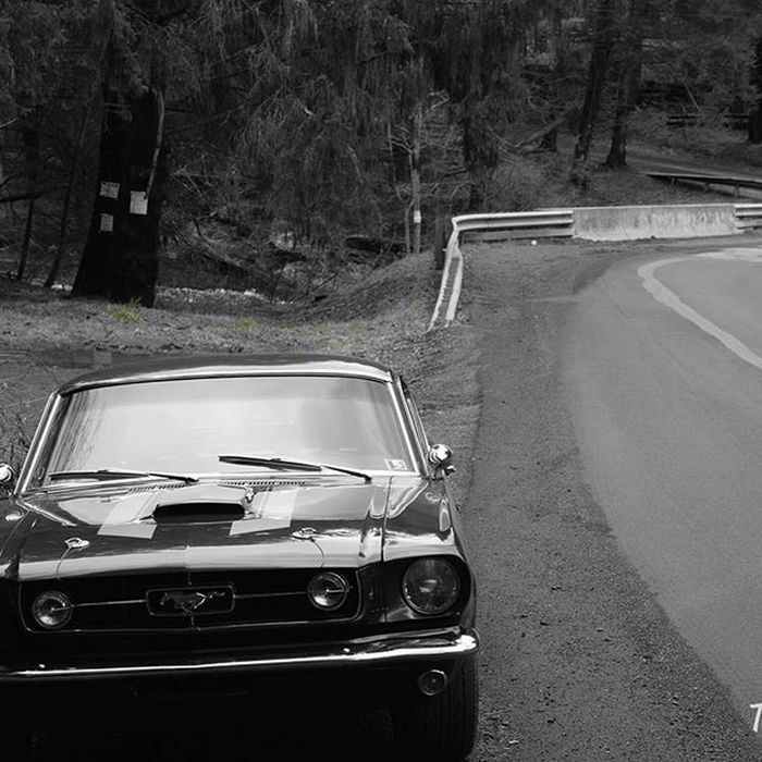I'm calling this throw back Monday because I can't wait for Thursday Tbm TBT  Mustang 1965 V8 302 Fastback  Manual Christmas Nikon Tomcat Photography Photo Explore Black Blackandwhite Ford Meow Street Streetshot Fourinthefloor Magnaflow Coilovers