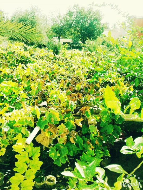 Green Color Nature Growth Tree Plant Leaf