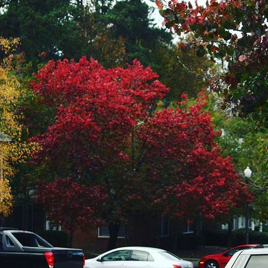 View from the parking! Latepost Withfilter Columbia SC Woodfield