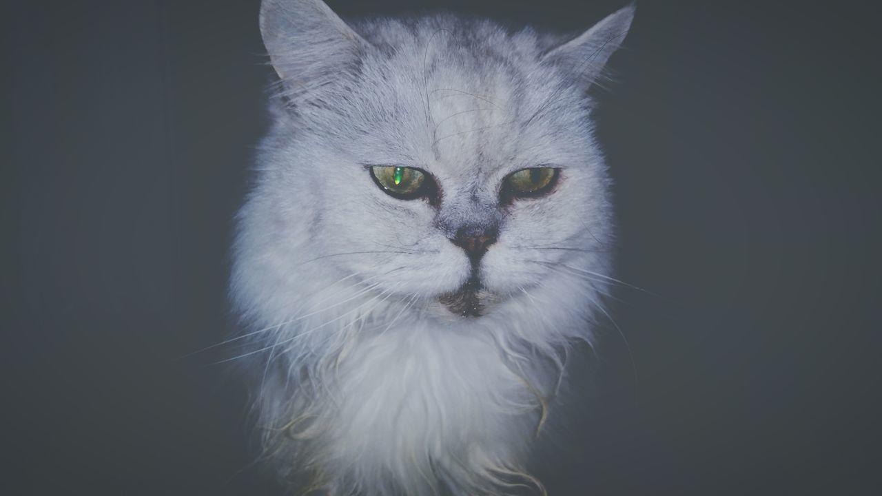My Cat Freddie Feline Cat Pet Cat's Eyes EyeEm Eyes Learn & Shoot: After Dark