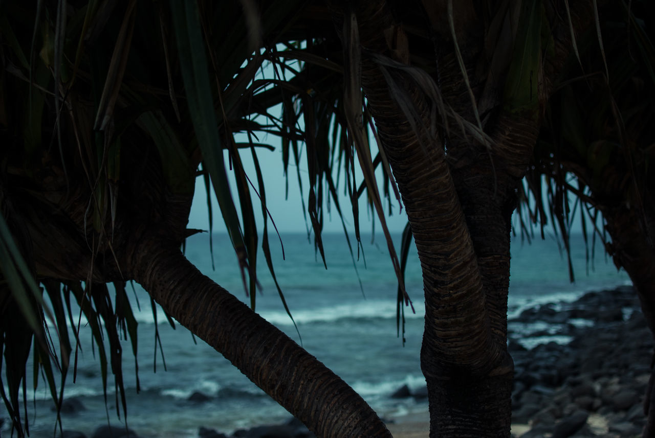 palm tree, nature, tree, tree trunk, growth, sea, beauty in nature, outdoors, no people, day