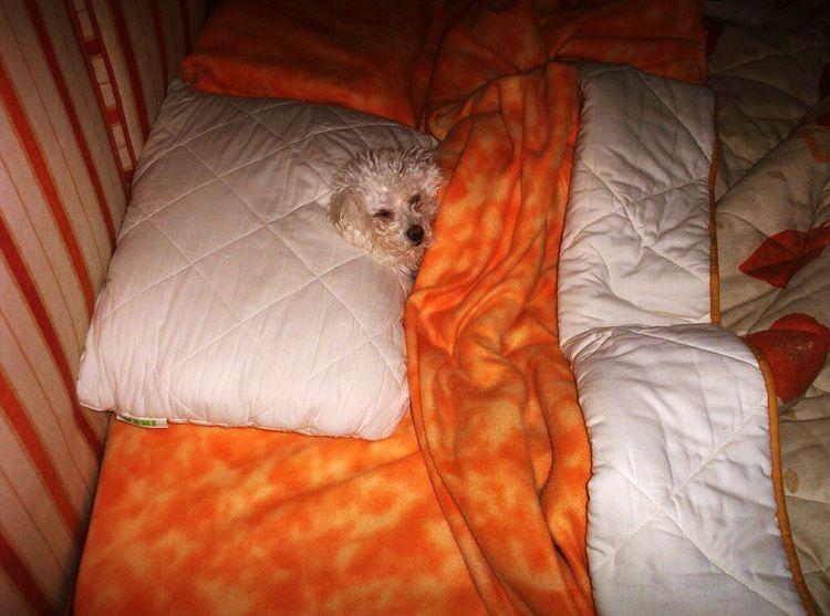 Mascot My Dog Happy Hi! Dog Dog Love Eye Em Animals Dogs Of EyeEm Relax I Love My Dog