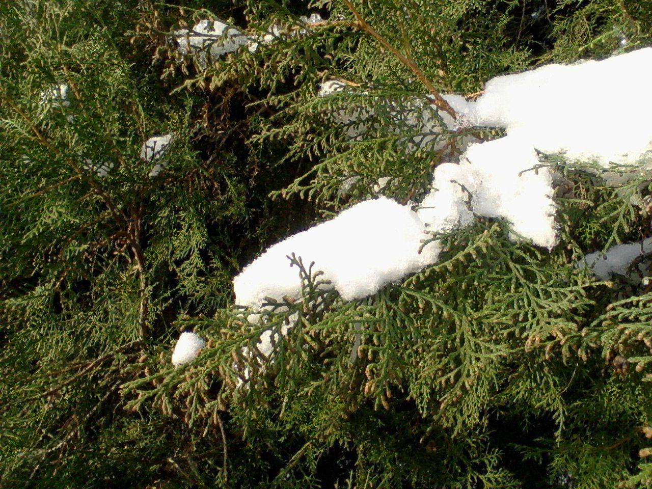 Измаил, Izmail City , мой родной город, Одесская область, Beauty In Nature Snow ❄