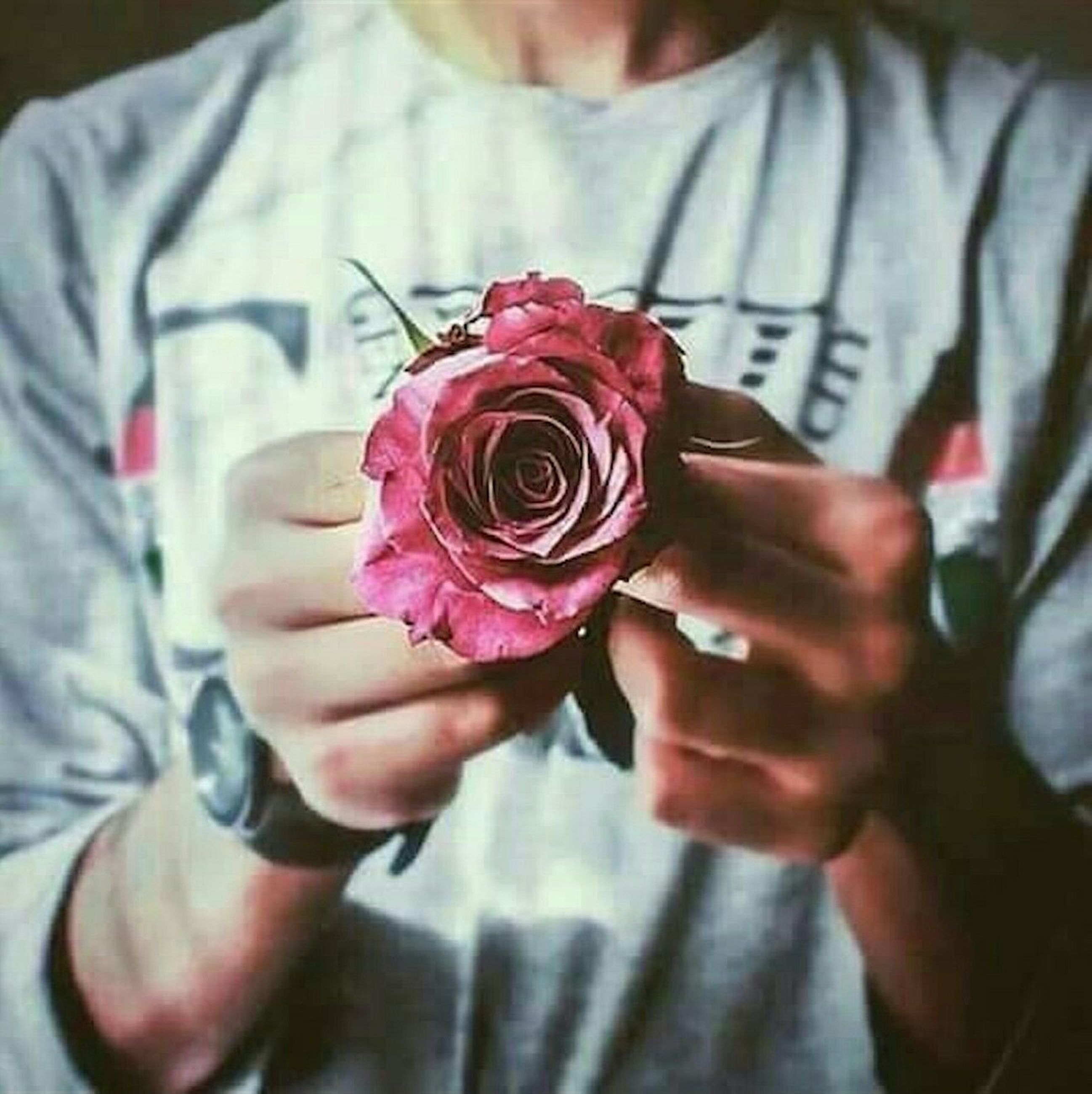 person, holding, indoors, lifestyles, flower, pink color, part of, focus on foreground, midsection, leisure activity, close-up, men, cropped, human finger, love