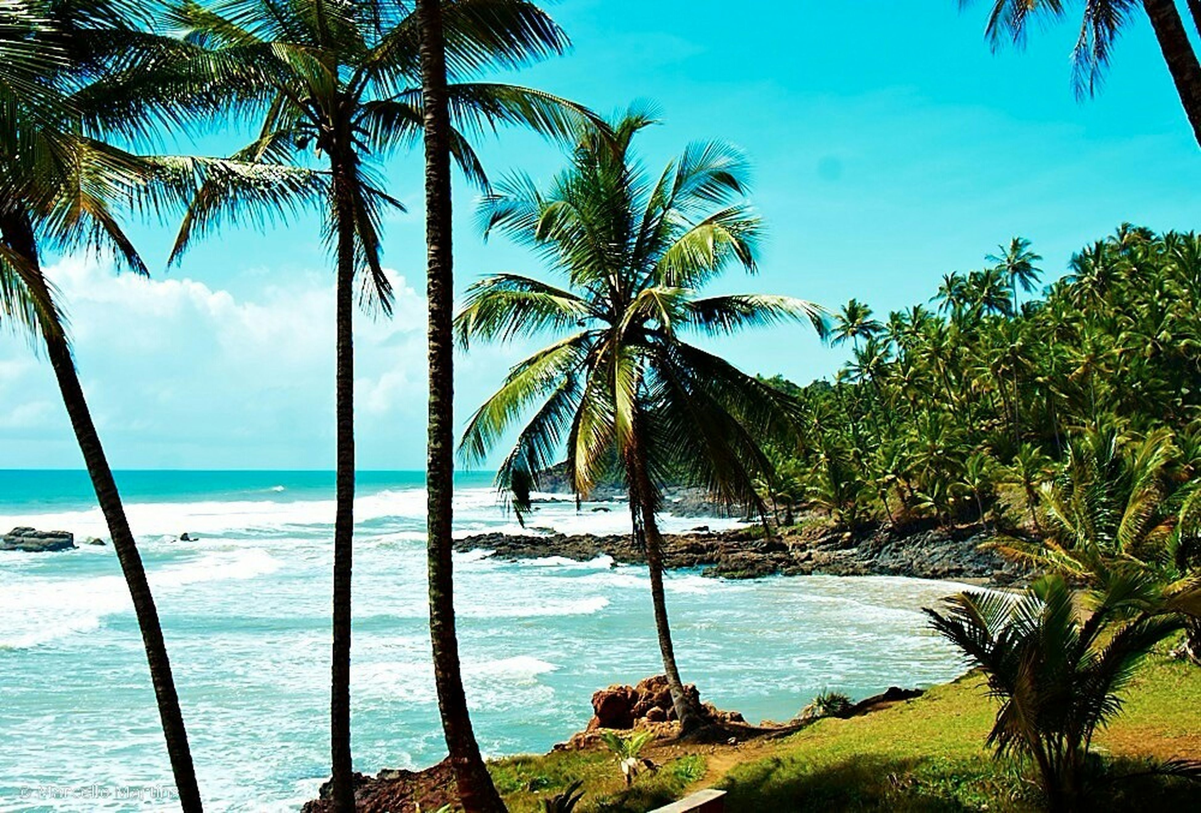 sea, palm tree, water, tree, horizon over water, beach, tranquility, tranquil scene, scenics, tree trunk, beauty in nature, sky, nature, shore, growth, blue, idyllic, branch, tropical climate, coastline