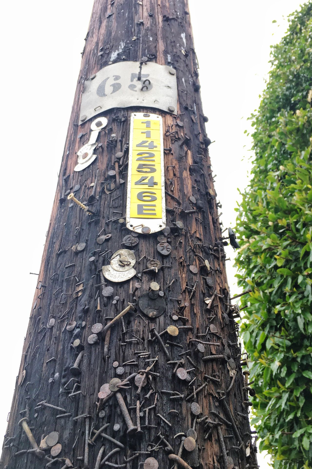 Tagged Telephone Pole Communication Nature Outdoors Low Angle View Text Close-up Sky Rusty Wood Tags Nails Traces Pins