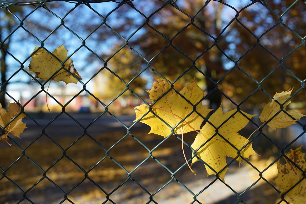 chainlink fence, safety, metal, protection, security, yellow, focus on foreground, day, no people, outdoors, close-up, full frame, backgrounds, nature, sky