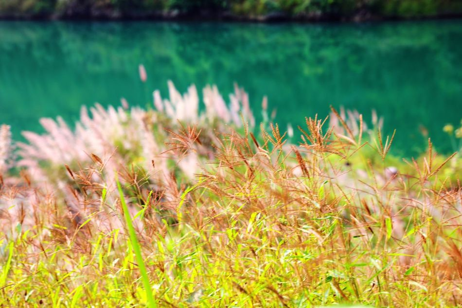 Nature Growth Plant Water Flower No People Beauty In Nature Lake Outdoors Day Close-up Grass Freshness Flower Head