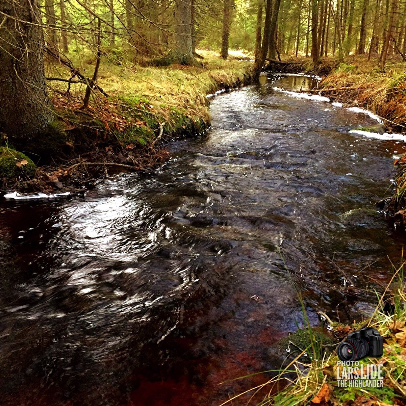 Nature Water Tree Flowing Water Stream Forest Outdoors Stream - Flowing Water No People Beauty In Nature Wetland Cold Temperature Taking Photos Winter