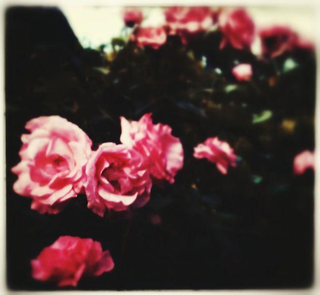 In my garden <3
