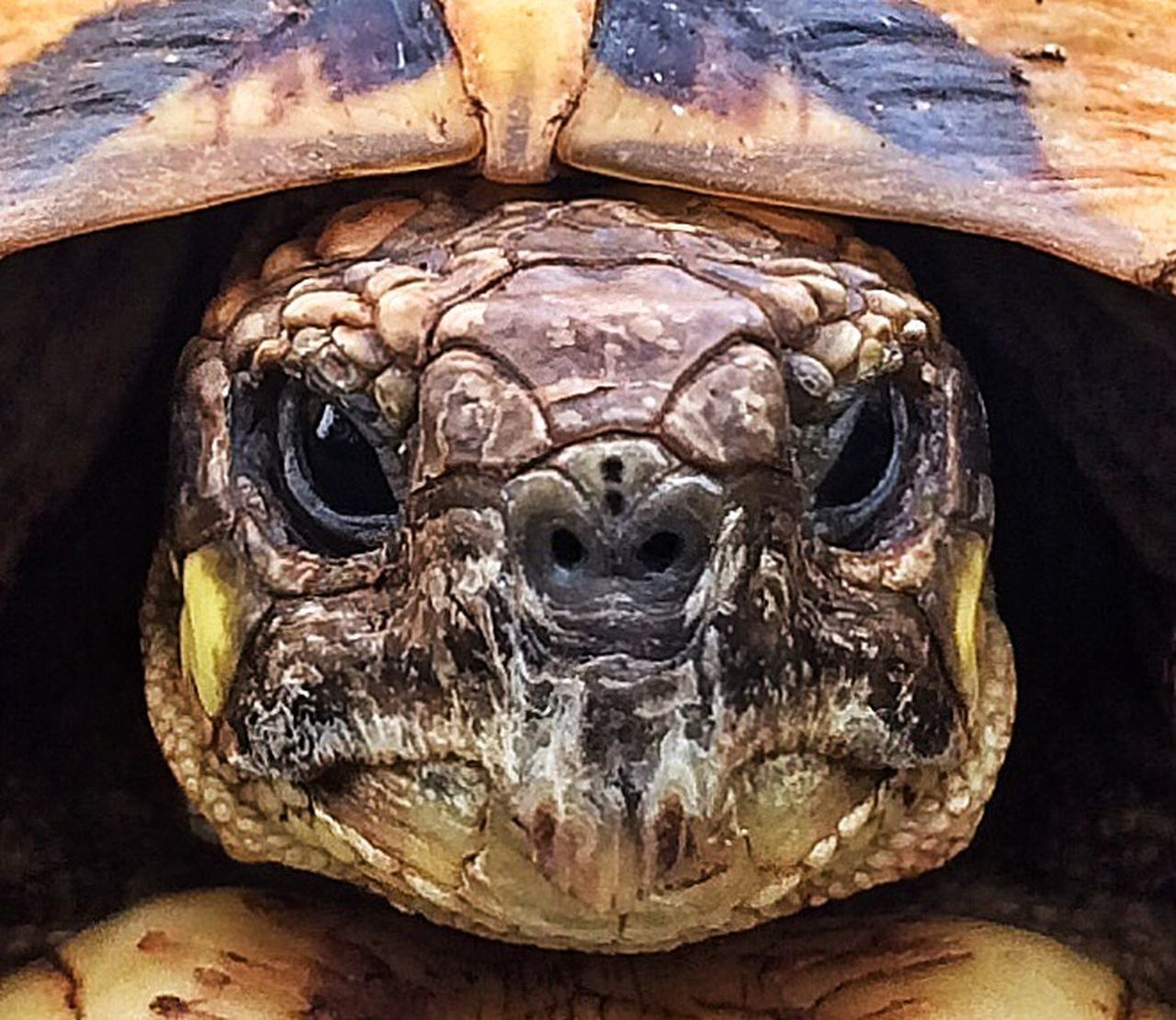 reptile, tortoise, animal wildlife, animal body part, tortoise shell, animals in the wild, animal head, close-up, one animal, animal themes, looking at camera, portrait, no people, day, nature, outdoors