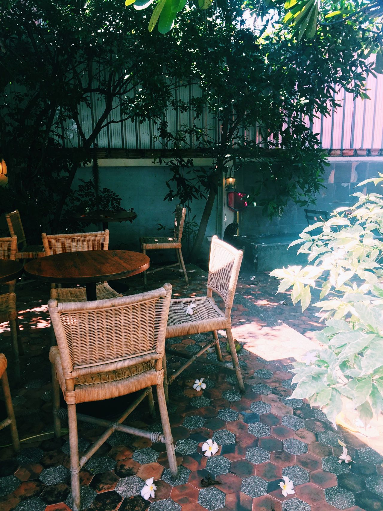 Chair Tree Outdoors Day Terrace Chiang Mai | Thailand Plant Table Nature
