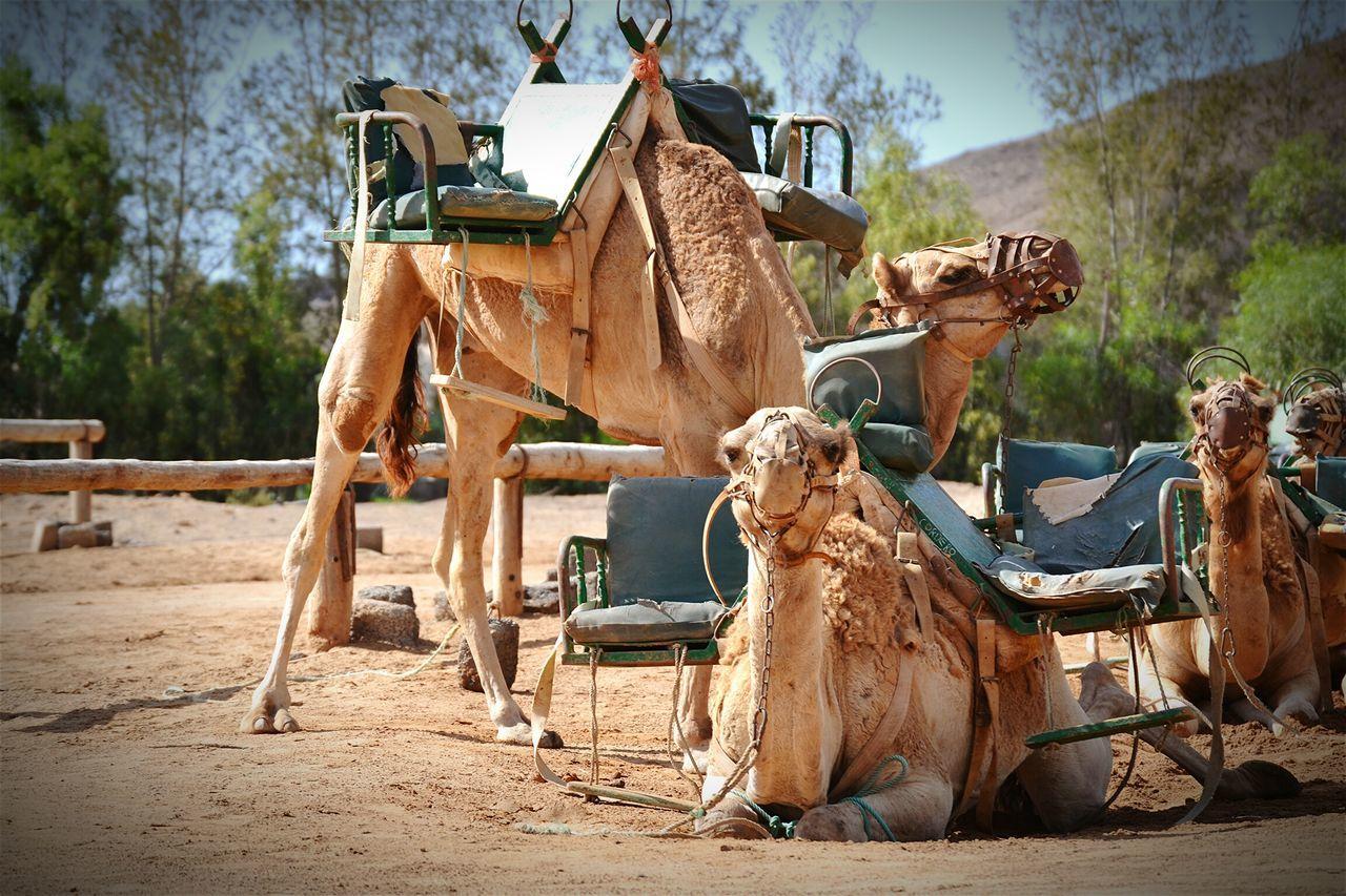 Feel The Journey Nikon Desert Taxi