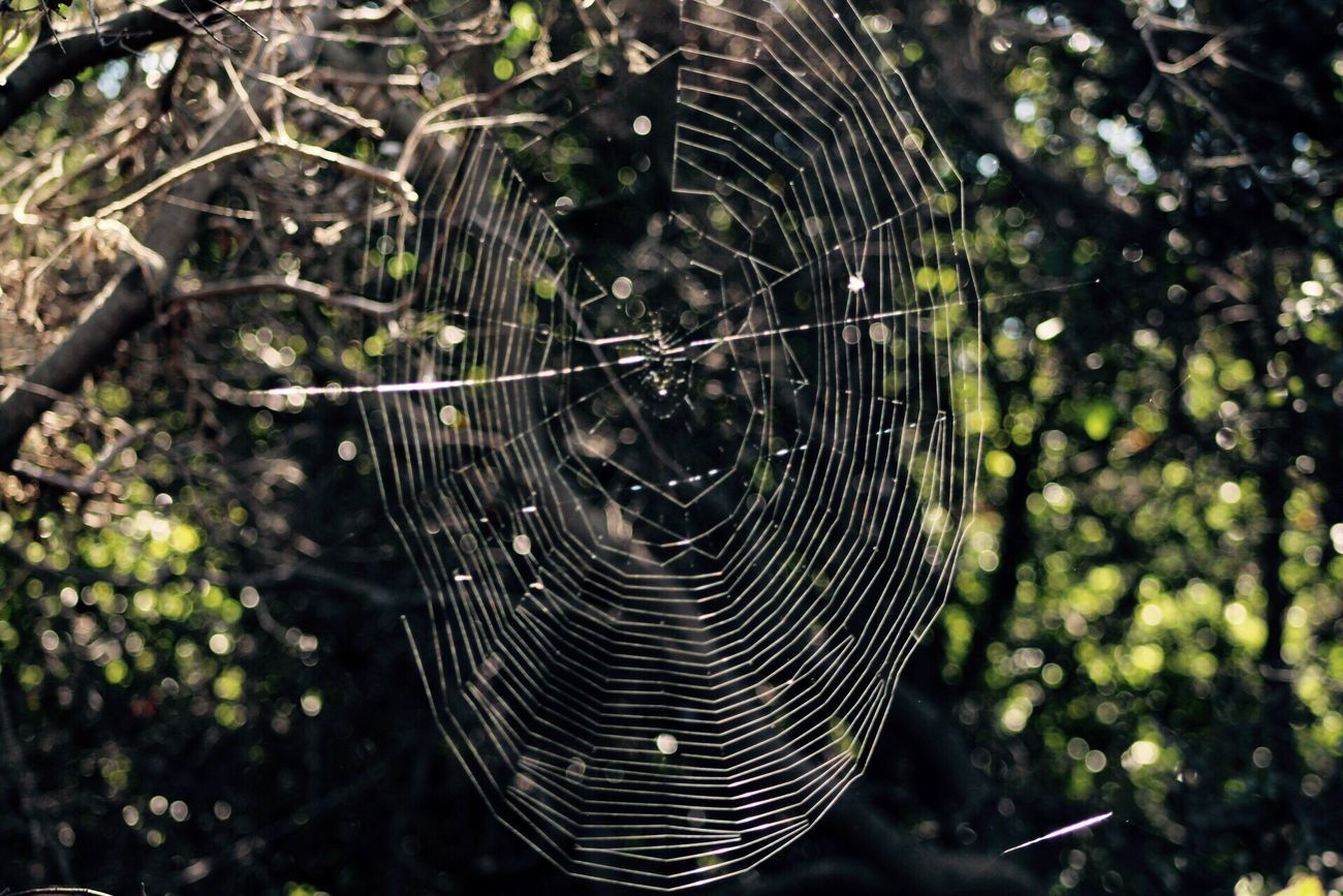 Someone is weaving traps among the trees... Spider Web Spider Fragility Focus On Foreground Animal Themes No People One Animal Close-up Complexity Nature Outdoors Web Animals In The Wild Day Beauty In Nature Acantilados de la Quirilluca, Región de Valparaíso